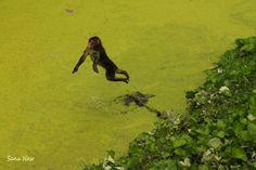 photographie singe