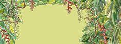 floresta amazônica de jair jacqmont, cenário da animação Amazônia Pintada,desenho/aquarela