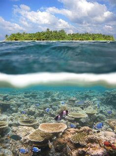 Photo: I hear the Maldives have some of the best snorkeling in the world, even comparable to the great barrier reef More At : http://naturesta.com/40-striking-examples-of-nature-photography/