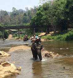Elephant ride through the river and forest