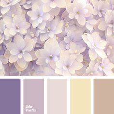 beige and brown colors, brown and beige colors, brown and purple colors, brown color, color of hydrangea, pastel yellow color, pink color, purple and brown colors