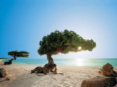 Travel guide for things to do and see in Aruba. Located off the coast of Venezuela Aruba is a small island in the Caribbean. Aruba Resorts, Hotels And Resorts, Luxury Hotels, Aruba Aruba, Florida Vacation, Florida Beaches, Sandy Beaches, Vacation Rentals, Aruba Island