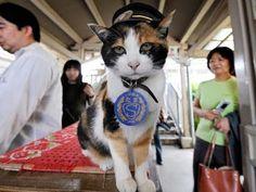 Muere Tama, la gatita que fue jefa de estación en Japón.
