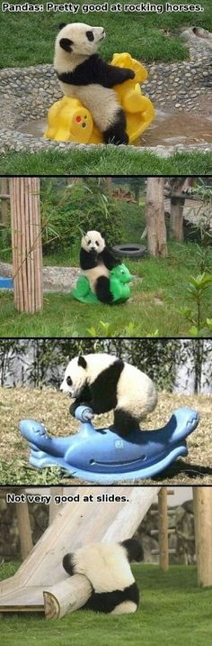oh my fried chicken. baby pandas. i have found my calling.