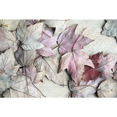 Autumn Photography, Leaves, Fall Photo, Nature Print, Rustic Charm,... ($40) ❤ liked on Polyvore featuring home, home decor and wall art