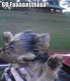 Attack Of The Funny Animals - 27 Pics