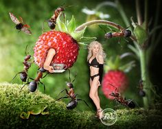 Teatime among ants and strawberries - Getting lost in nature is never a waste of time. Love, Kim