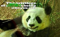 Hello panda lovers!