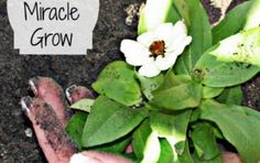 5 Best Homemade Fertilizers For your Plants | The WHOot