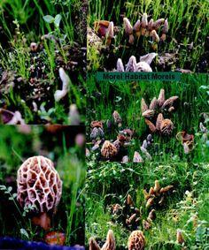 28 Best mushroom growing images in 2019 | Stuffed Mushrooms, Growing