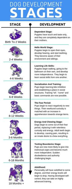 The developmental stages of puppy growth Understanding every stage of your puppy's development enables you to tailor your raising and training, resulting in a more balanced dog. - Baby Development Tips Puppy Training Tips, Training Your Dog, Potty Training, Training Classes, Agility Training, Training Pads, Training Collar, Brain Training, Training Videos