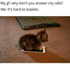Chase The Time Away With Caturday Cat Memes) - World's largest collection of cat memes and other animals Cute Animal Memes, Animal Jokes, Cute Funny Animals, Funny Animal Pictures, Funny Cute Cats, Funny Cat Memes, Funny Relatable Memes, Tier Fotos, Cute Little Animals