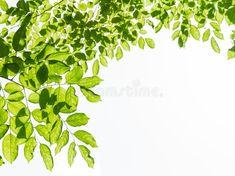 Parsley, Herbs, Food, Essen, Herb, Meals, Yemek, Eten, Medicinal Plants