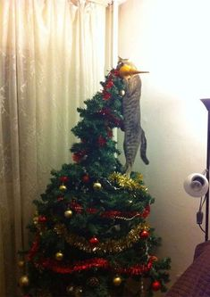 Cats vs Christmas Trees – 33 Pics