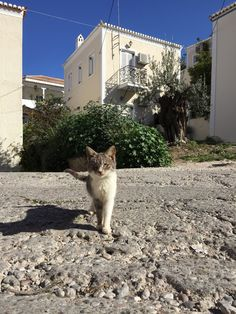 Husky, Island, Explore, Cats, Animals, Gatos, Animales, Animaux, Islands