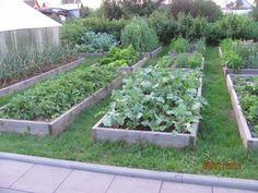 С чего начать органическое земледелие?