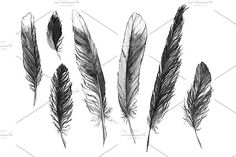 Watercolor black and white monochrome feather set isolated by Art By Silmairel on @creativemarket