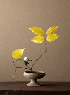 """Ikebana: The Japanese art of arranging plants - Japanese rouba with camellia bud in a traditional flat vase to """"taste"""" the water. Ikebana Arrangements, Floral Arrangements, Flower Arrangement, Concrete Architecture, Art And Architecture, Japanese Flowers, Japanese Art, Yellow Roses, Purple Flowers"""