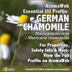 Explore the uses for German Chamomile Essential Oil. Discover its benefits, safety info, botanical name, aromatic description, what to watch out for and more. German Chamomile Essential Oil, Chamomile Oil, Essential Oil Uses, Aromatherapy, Herbalism, Benefit, Essentials, Profile, Education