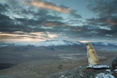 Sebastian Wahlhuetter est un photographe autrichien qui s'est spécialisé dans les clichés en extérieur. Cette image a été capturée lors d'un trek dans l'Himalaya. « Ce chien est apparu de nulle part et nous a suivis pendant une semaine entière lors de notre randonnée dans les montagnes de l'Himalaya.  himalaya-chien