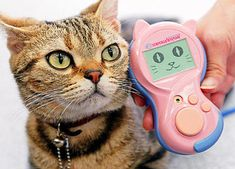"""""""You REALLY wanna know what I'm thinking?..."""" This is called a Meowlingual Cat Translation Device"""
