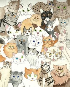 Cats and more cats