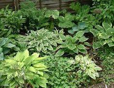 florida shade garden - Google Search