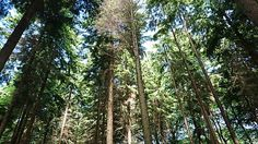 #trees #forrest