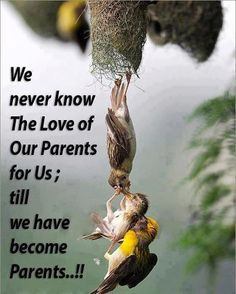 How true. Since the birth of my son , I love my parents more:-)