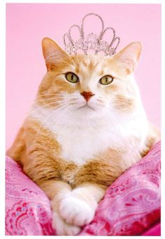 my weird new obsession... cats with tiaras....