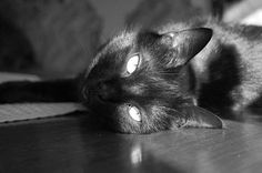 My black cat Rio looking gorgeous.