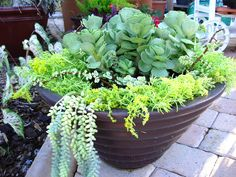 Container Gardening Pictures | container gardening with katg please visit my new cubit la