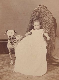 1860's CDV Photograph of A Dalmatian Dog with A Baby Hidden Mother | eBay