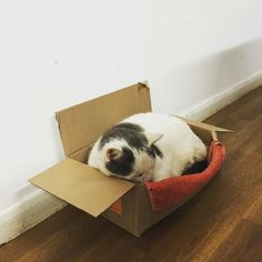 We love Hugo we bought him a bed but he still prefers the box. You can take the cat out of the 'hood but we can't take the 'hood out of the cat. #gangstercat #instacat #ferociousfeline #rpmtechnik #aircooledcat
