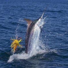 Deep Sea Fishing Poles And Reels Combo Sport Fishing, Going Fishing, Fishing Tips, Fishing Lures, Fly Fishing, Fishing Shirts, Salt Water Fish, Salt And Water, Marlin Fishing