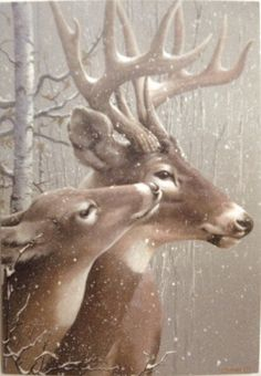 Doe and Buck - (Christmas, winter, deer) Deer Photos, Deer Pictures, Animal Pictures, Beautiful Creatures, Animals Beautiful, Animals And Pets, Cute Animals, Deer Art, Tier Fotos
