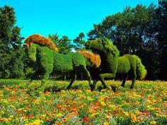 El arte en mi jardín. Foto La Voz de Rusia