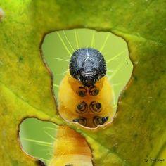 hi ! by bug eye :)