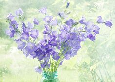 Blue Flowers Photograph Summer Still Life Floral Art by JudyStalus