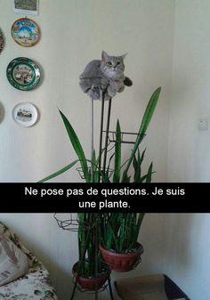 Voici 30 photos de chats avec des sous-titres hilarants (nouvelles photos)