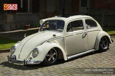 nice white beetle