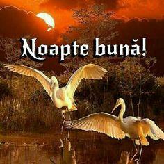 Beautiful Sunset, Good Night, Movies, Movie Posters, Animals, Nighty Night, Animales, Films, Animaux
