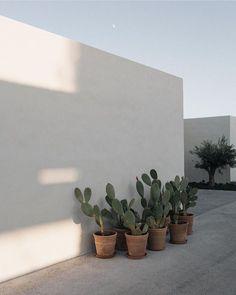 Le plus récent Écran mediterranean Style Architectural Réflexions Exterior Design, Interior And Exterior, Outdoor Spaces, Outdoor Living, Natural Interior, Garden Inspiration, Indoor Plants, Outdoor Gardens, Planting Flowers