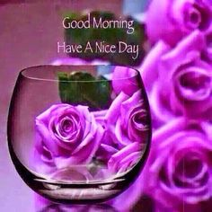 Good morning purple rose blessed friday, peace of god, good day, good morning Good Morning Beautiful Girl, Latest Good Morning Images, Good Morning Roses, Good Morning Picture, Good Morning Good Night, Morning Pictures, Morning Pics, Good Morning God Quotes, Morning Greetings Quotes
