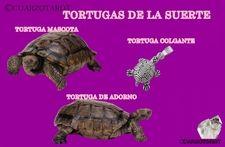 Tortugas de la suerte  https://www.cuarzotarot.es/blog/posts/tortugas-de-la-suerte #FelizJueves #Suerte