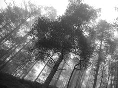 Black & White - Forest in Zlatibor (Serbia) #Woods, #ghostly, #Haunting, #trees