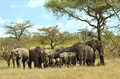 Join a unique trek across Kenya to raise funds for #elephant conservation. Learn more here: http://www.hiddenplaces.net/walking-safari.php