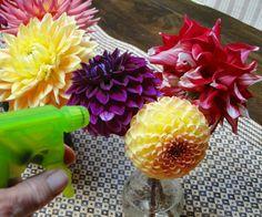 How to prepare Dahlias for elegant, home-made centerpieces