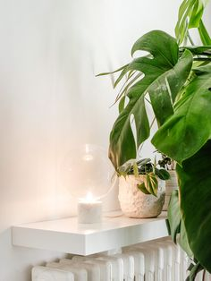 Little corner details, a lamp by Studio Vit from & tradition by a monstera deliciosa plant, Ou Bien Encore Geneva. Monstera Deliciosa, Geneva, Plant Leaves, Corner, Studio, Plants, Cafes, Planters, Study