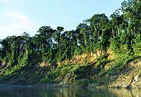 Peru - Manu' National Park, a biosphere reserve in the Peruvian Amazon
